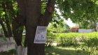 В Чаадаевке листы А4 на деревьях назвали предупреждающими табличками