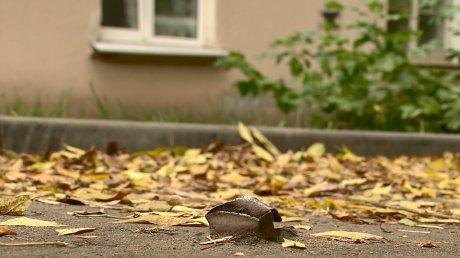 На улице Докучаева с весны не могут убрать штырь с тротуара