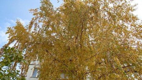 Как в свинарнике: двор на улице ДОС засыпало листьями